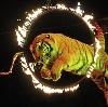 Цирки в Дмитриеве-Льговском