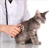 Ветеринарные клиники в Дмитриеве-Льговском